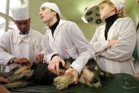 Кетамин может быть реабилитирован для ветеринаров