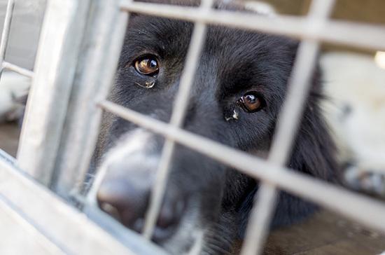 В России может появиться уполномоченный по защите животных