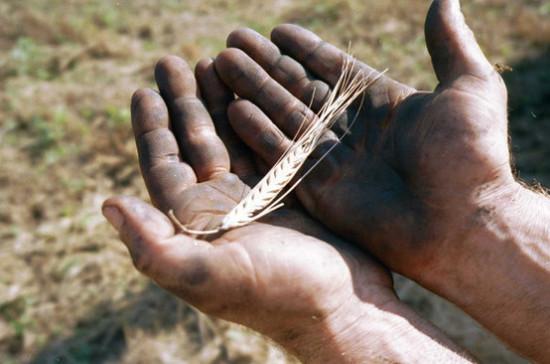 Российский зерновой союз: роста цен на рис не будет