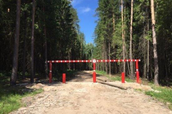 Путин поручил Кабмину принять меры позащите лесов