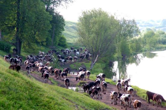 Белоруссия ввела ограничения на поставку мясной продукции в РФ