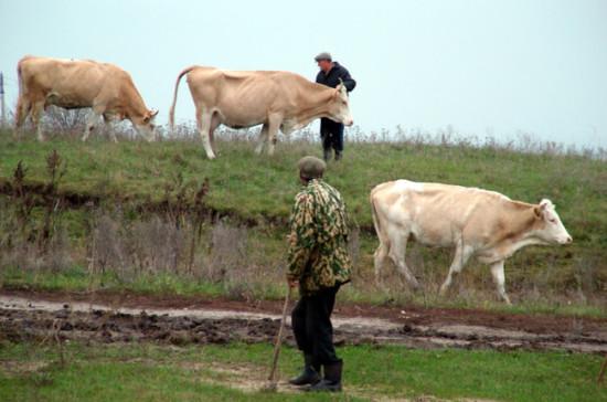 Щетинин: обеспечение населения молоком — ключевой элемент продовольственной безопасности