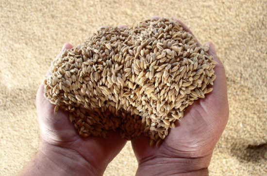 В Совфеде считают, что контролировать качество производимого зерна должно государство