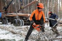 Лес перестанут вырубать «безвозвратно»
