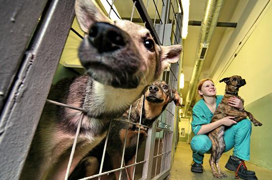 В приютах запретят умерщвлять собак