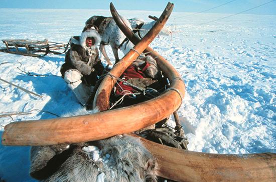 Кому уходят российский лес, янтарь и мамонтовые бивни
