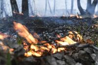 Сенаторы предлагают увеличить штрафы за розжиг костров до миллиона рублей