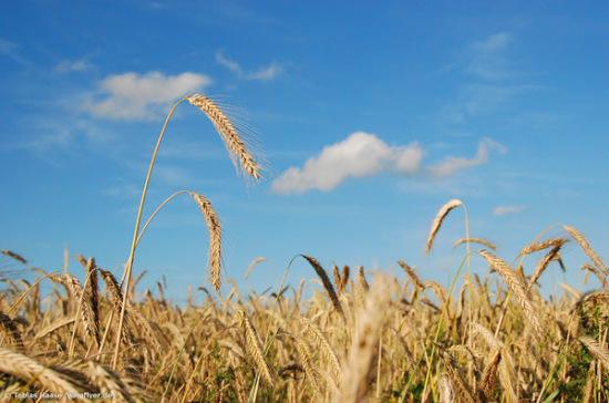 ВУкраине посев яровых зерновых проведен наплощади 5,5 млн га