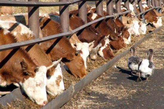 Россельхознадзор запретил ввоз мясной продукции с 3-х заводов в Беларуси
