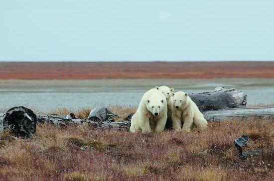Арктику не нужно покорять. Ее нужно обживать