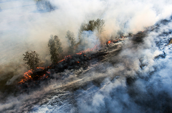 Засутки площадь лесных пожаров вСибири подросла в 4 раза