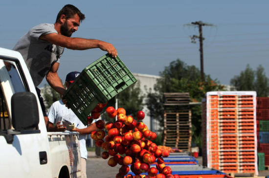 Россельхознадзор отчитался об уничтожении 14 тысяч тонн санкционных продуктов