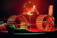 Международный фестиваль  циркового  искусства  впервые  пройдет  в Беларуси