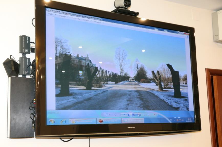 Масштабную обрезку деревьев в Ленобласти отрегулируют местным законом