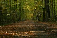 Грибников выведут из леса стрелочные указатели