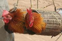 Амурские депутаты предлагают бороться с ящуром повышением штрафов