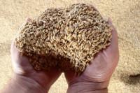 Россия нарастила экспорт зерна на 5% по итогам сельхозгода