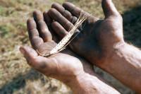 Ставка единого сельхозналога останется на уровне 6%