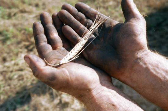 Депутат Кашин призвал повышать доходность агропредприятий
