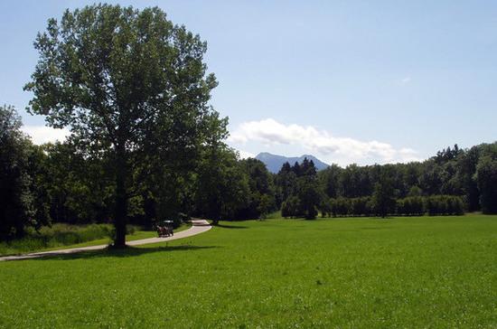 Самарские депутаты предложили передать городские леса из федеральной собственности в местную