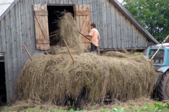В Ленобласти вырос объём поддержки фермеров