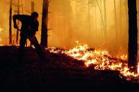 Горит сурово русский лес