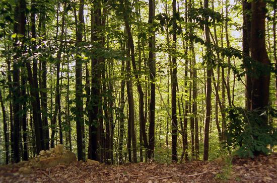Три думские фракции попросили перенести на осень рассмотрение законопроекта о «лесной амнистии»