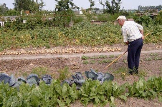 Сенаторы поддержали закон о садоводстве и огородничестве