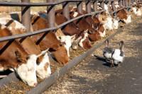 Китай начал снимать ограничения на мясную продукцию из России