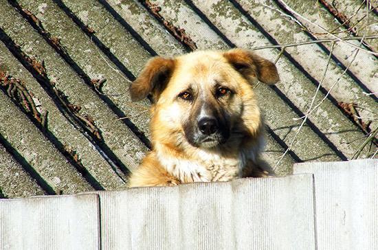 В Мурманской облдуме предложили запретить подкармливать бездомных животных