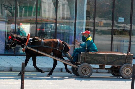 В Москве хотят отменить штраф за лошадиный навоз на тротуарах и в скверах
