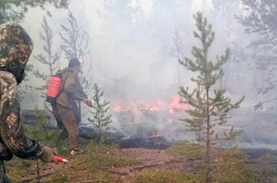 Засутки вПриморье потушили половину лесных пожаров