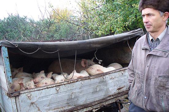 В Госдуме поддерживают повышение штрафов за перевозку сельхозживотных без ветеринарных документов