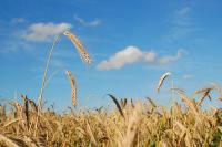 Депутаты готовят законопроект по мониторингу почв