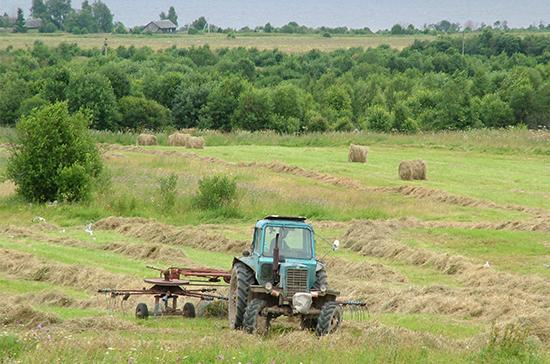 Государство начнёт закупать сельхозпродукцию у индивидуальных предпринимателей
