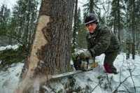 Лесной — кодекс: десятилетие изменений