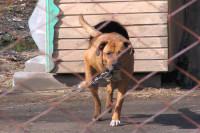 Пять лет тюрьмы за жестокое обращение с животными