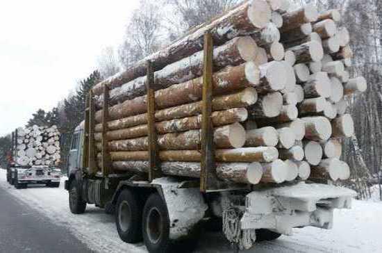 Красноярскому предпринимателю грозит 7 лет за вырубку леса