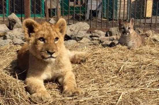 В Приморском крае установили личности нападавших на животных в зоопарке