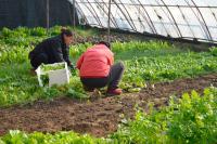 Садоводческие товарищества получат лицензии на пользование недрами бесплатно