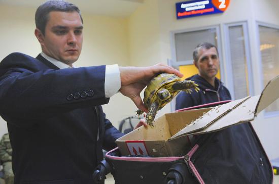 Полиция не будет проверять карманы и багаж авиапассажиров