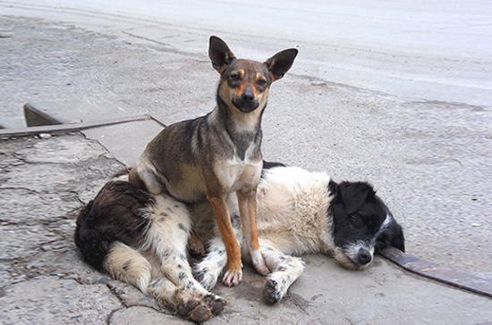 Президент России подписал закон об усилении ответственности за жестокое обращение с животными