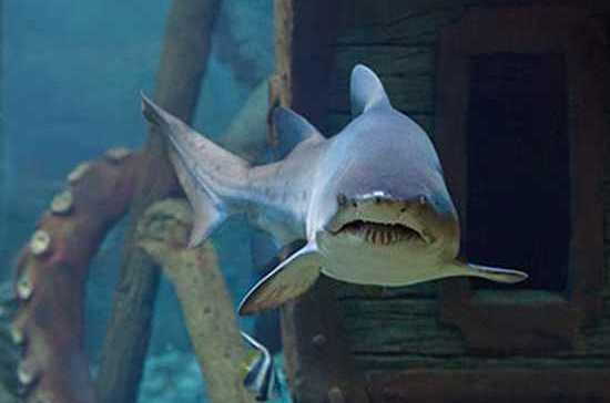 В Воронеже Дед Мороз-водолаз все новогодние праздники будет нырять в океанариум к акулам и муренам