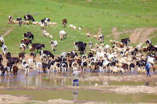 В Волгоградской области защитили плантации земледельцев от пасущихся стад