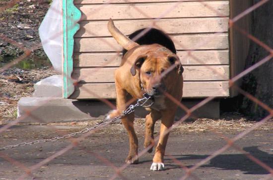 Закон, запрещающий контактную притравку охотничьих животных, отклонен