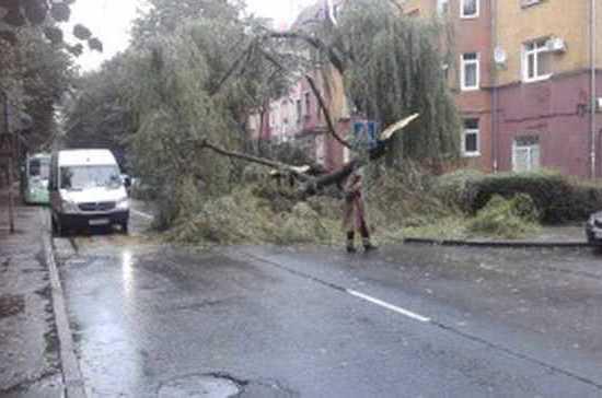 В Калининградской области от штормового ветра повалено более 70 деревьев и повреждено 9 автомобилей