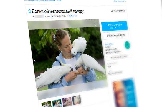 Наказание за незаконную продажу редких животных через Интернет предложили ужесточить