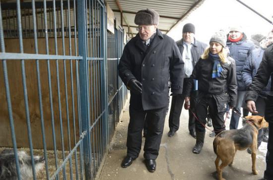 Закон об ответственном обращении с животными могут принять уже в этом году