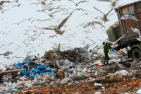 Новейшие мусороперерабатывающие заводы появятся в России через три года