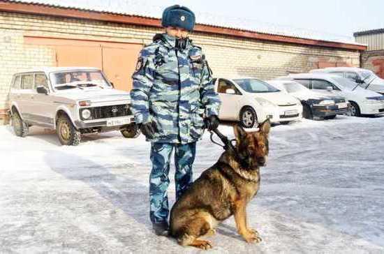 В Приморском крае полицейские со служебной собакой раскрыли кражу сейфа с оружием
